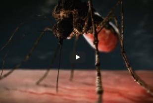 https://mrmosquitony.com/wp-content/uploads/2021/04/mosquito-week.jpg